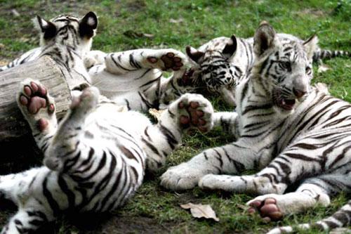 長隆動物園